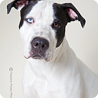 Adopt A Pet :: Emma - Apache Junction, AZ