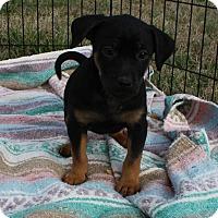 Adopt A Pet :: Mercury $250 - Seneca, SC