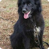 Adopt A Pet :: Bessie - Canterbury, CT