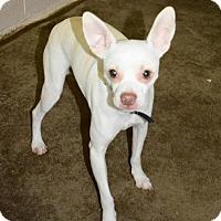 Adopt A Pet :: Taco - Fairmont, WV