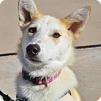Adopt A Pet :: Breya *Youth* - Gretna, NE