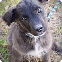 Adopt A Pet :: Doc - DFW, TX