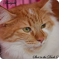 Adopt A Pet :: Marigold - Leamington, ON