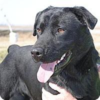 Labrador Retriever Mix Dog for adoption in Tunica, Mississippi - Tojo