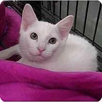 Adopt A Pet :: Leland - The Colony, TX