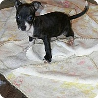 Adopt A Pet :: Racer - Vidor, TX