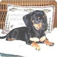 Adopt A Pet :: Dana - Mooy, AL