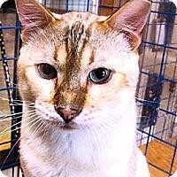 Adopt A Pet :: Alexi - Davis, CA