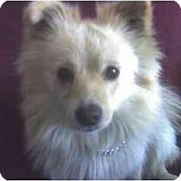 Adopt A Pet :: KUMO - Fowler, CA