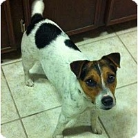 Adopt A Pet :: Sadie (SJ) - Harrah, OK