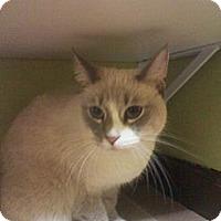 Adopt A Pet :: Silver - Monroe, GA