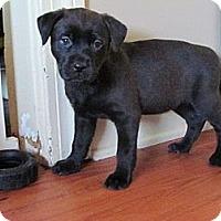 Adopt A Pet :: cindy - Cleveland, OH