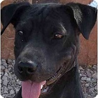 Adopt A Pet :: Bellesera - Las Vegas, NV