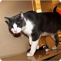Adopt A Pet :: Wilhelm - Nolensville, TN