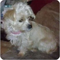 Adopt A Pet :: Aaralyn - Phoenix, AZ