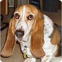 Adopt A Pet :: Beauford - Phoenix, AZ