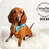 Adopt A Pet :: Oscar - Omaha, NE