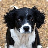 Adopt A Pet :: Lucas - Garland, TX