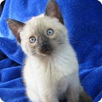 Adopt A Pet :: Milano - Davis, CA