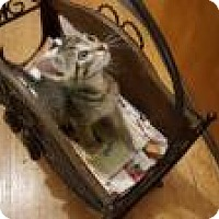 Adopt A Pet :: PURfect Parker - Berkeley Hts, NJ