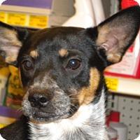Adopt A Pet :: Chealsea - Fresno, CA