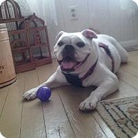 Adopt A Pet :: Frechii - Columbus, OH