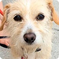 Adopt A Pet :: MARIAH (video) - Los Angeles, CA