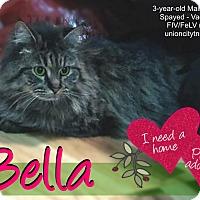 Adopt A Pet :: Bella - Union City, NJ