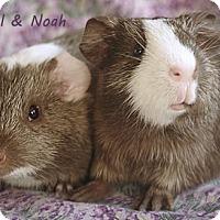 Adopt A Pet :: Nigel & Noah - Santa Barbara, CA
