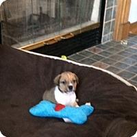 Adopt A Pet :: Georgia - PENDING - Grafton, WI