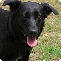 Adopt A Pet :: Shiloh - York, PA