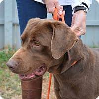 Adopt A Pet :: Goose - Charleston, SC