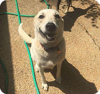 Huntsville Alabama Dog Rescue