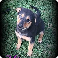 Adopt A Pet :: Mica - Denver, NC