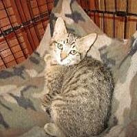 Adopt A Pet :: Tuffy - Delmont, PA