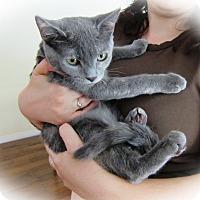 Adopt A Pet :: Petal - Orange, CA