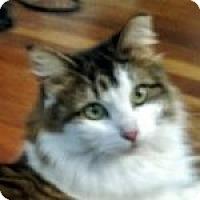 Adopt A Pet :: Leighann - Medford, MA