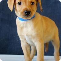 Adopt A Pet :: Anson - Waldorf, MD