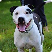Adopt A Pet :: Biggs - Dayton, OH