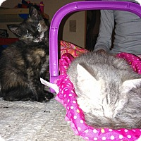 Adopt A Pet :: Cali and Ashley - Parkton, NC