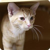 Adopt A Pet :: Bushfire - Kettering, OH