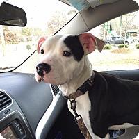 Adopt A Pet :: Tucker - Raleigh, NC