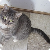 Adopt A Pet :: Loni - Glenwood, MN
