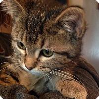 Adopt A Pet :: Lola - St Paul, MN