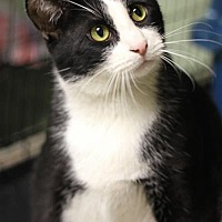 Adopt A Pet :: Callahan - Yukon, OK