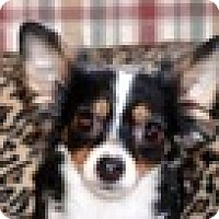 Adopt A Pet :: Elaina - Portola, CA