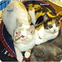 Adopt A Pet :: Speckles - Jacksonville, FL