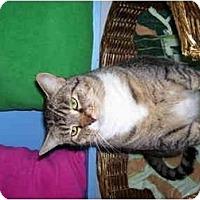 Adopt A Pet :: Jinx - Mission, BC