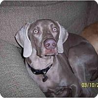 Adopt A Pet :: Jake - Attica, NY