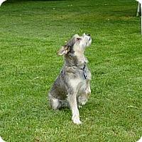 Adopt A Pet :: Delilah adopt pending - Nine Mile Falls, WA